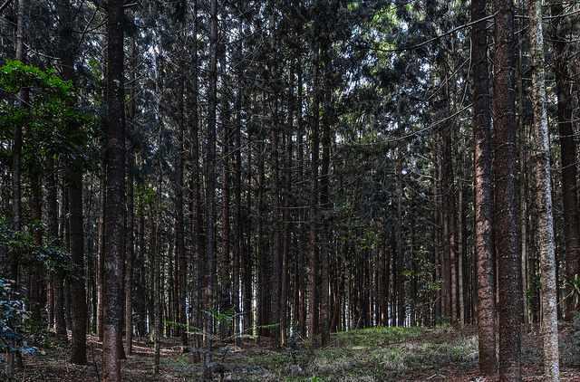Karura forest wedding