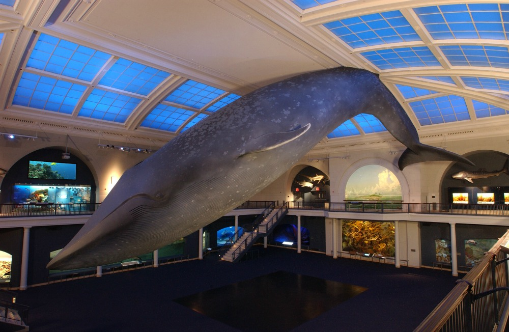 Museum Of Natural History Nyc Hours And Admission