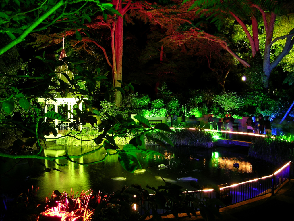 The 10 most extraordinary glow worm caves in the world for Garden pond lights