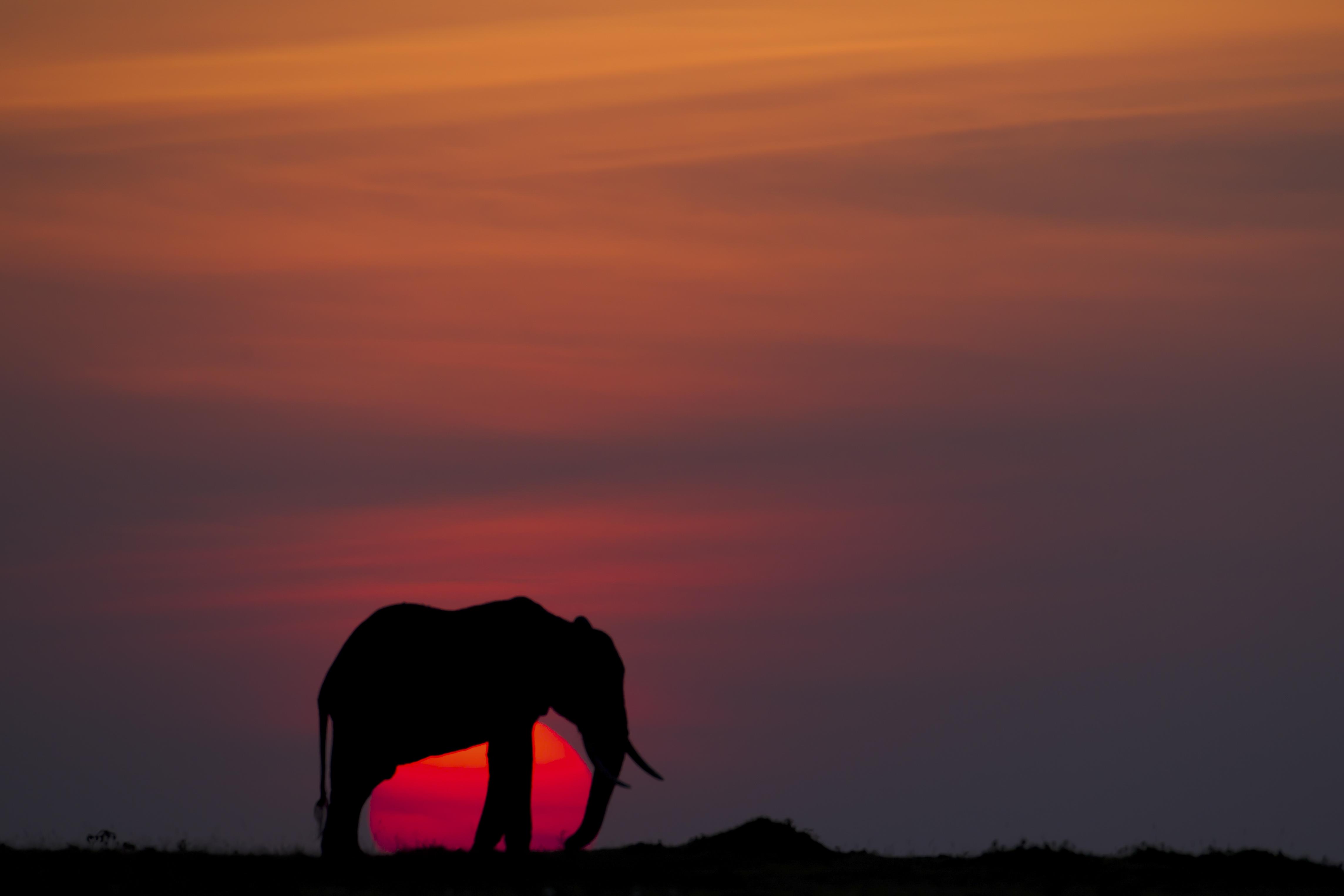 Blue Wildebeests at Sunrise, Masai Mara, Kenya  № 1443727 загрузить