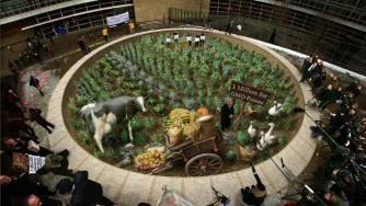 Greenpeace GMO Petition