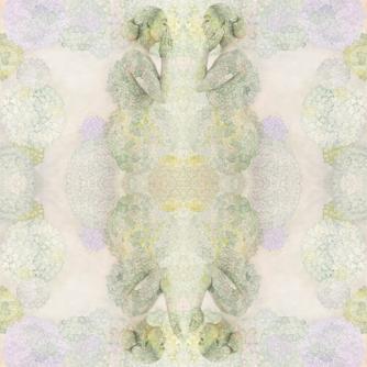 Emma Hack, Hydrangea Whispers