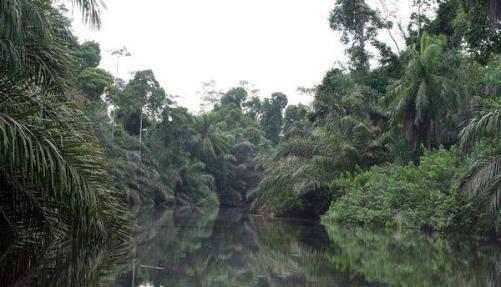 Rainforest in Gabon