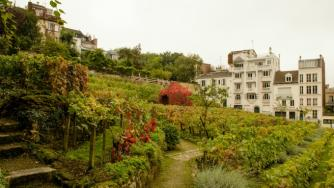 The Montmartre Grape Harvest Festival