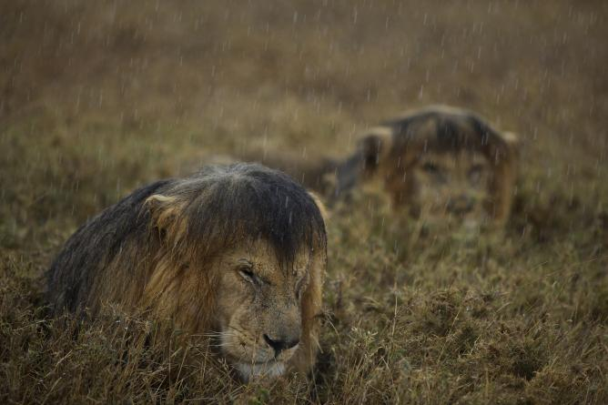 Michael Nichols, Sharing a shower, National Geographic, USA | Courtesy of Wildlife Photographer of the Year
