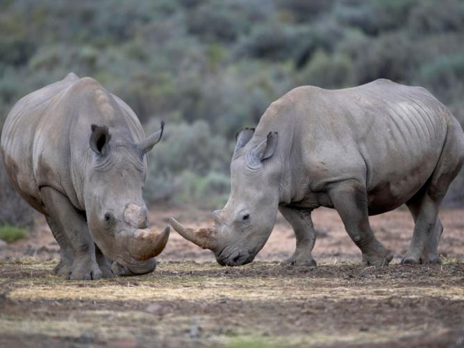 Aquila Private Game Reserve - Horseback Safari