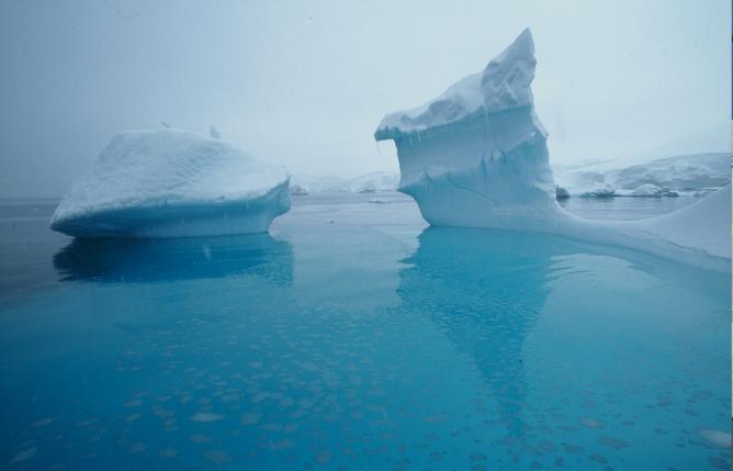 Iceberg | © Sandy Nicholson