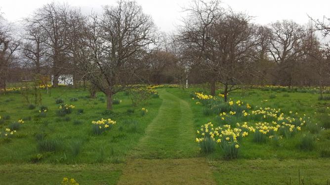 Sissinghurst - The Orchard