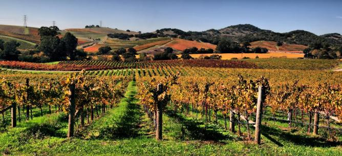 Majestic view of Napa; wine and food country