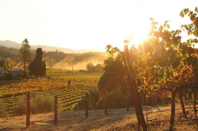 Sonoma County California The 10 Best Wineries And Vineyards