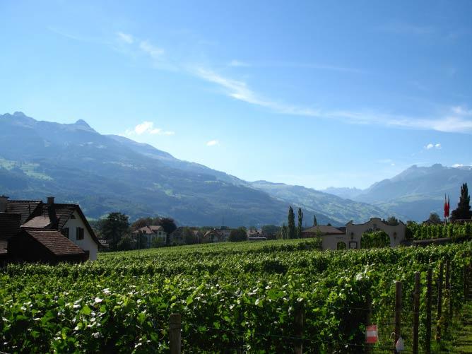 Vineyards near Vaduz (c) Andrew Bossi/Wikicommons
