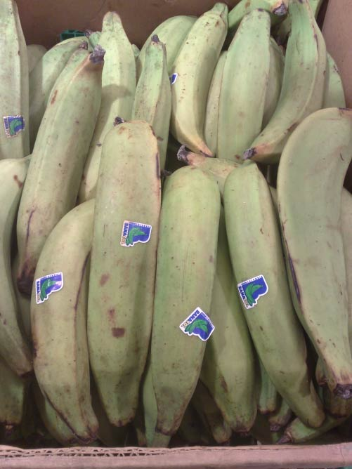 Plantain © paegis/Wikipedia