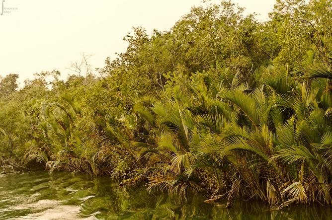 Sundarbans | © WikiCommons