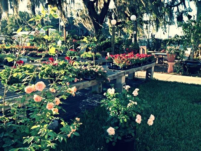 The Garden Café at McLane's Country Garden, Courtesy of McLane's