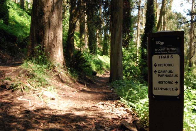 The 5 Best Hikes To Take In The San Francisco Bay Area
