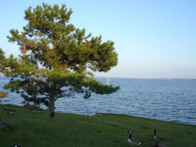 Ross R. Barnett Reservoir from Ridgeland | © Shawn Rossi/Flickr