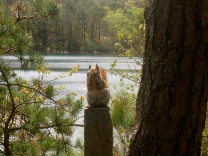 Chipmunk Hangin in the Park