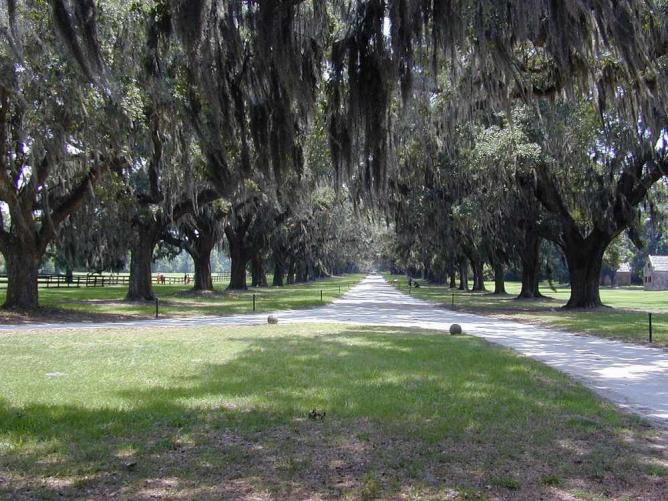 Boone Hall, Mount Pleasant | © Jan Kronsell/WikimediaCommons