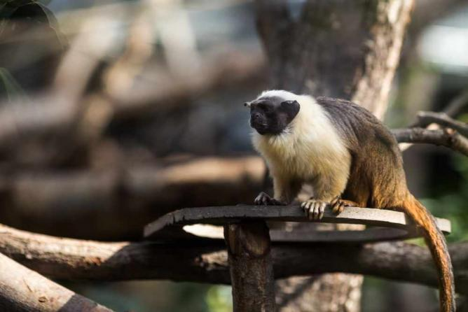 Parc Zoologique de Paris | © Parc Zoologique de Paris/WikiCommons