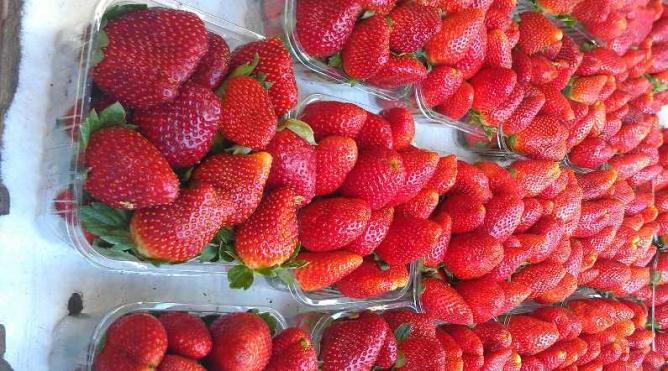 Strawberry season at the Shuk | © Arielle Macey-Pilcher