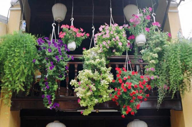 Flower display   © Khánh Hmoong/Flickr