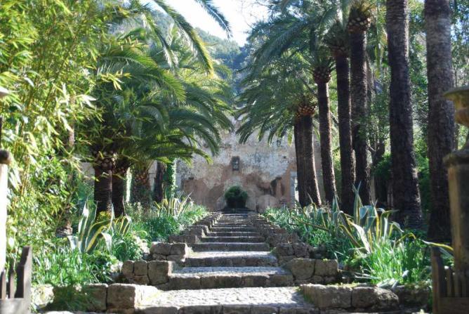 Jardins d'Alfàbia Palm Trees | © Courtesy Jardins d'Alfàbia