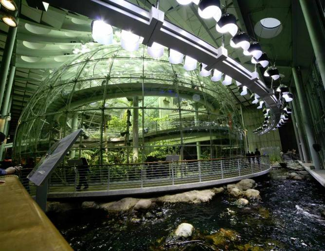 California Academy of Sciences Indoor Rainforest | © TheDailyNathan/Wikicommons