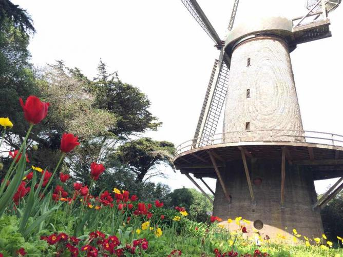 Dutch Windmill and The Queen Wilhelmina Tulip Garden | © Sarah Nguyen/Wikicommons