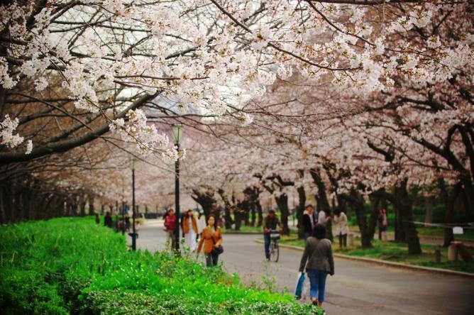 Kema Sakuranomiya Park | © Tak/Flickr