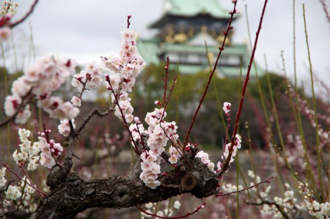 Osaka Castle Park | © pelican/Flickr