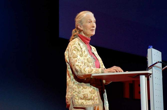 Jane Goodall speaking at TED Global, 2007 | © Erik Hersman/wikicommons