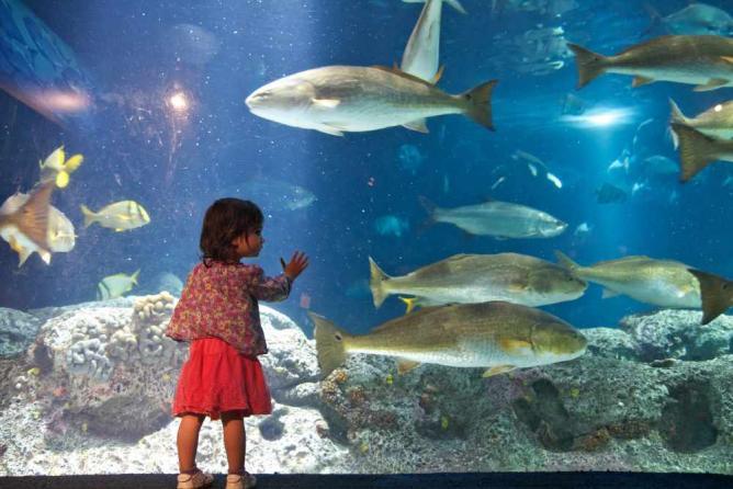 South Carolina Aquarium   © Harry Alverson