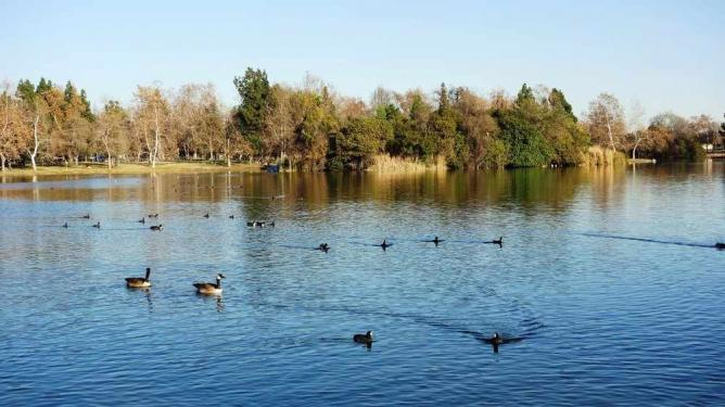 Legg Lake at Whittier Narrows | © Yelp