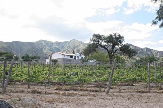 Bodega Domingo Molina   Image courtesy of Bodega Domingo Molina