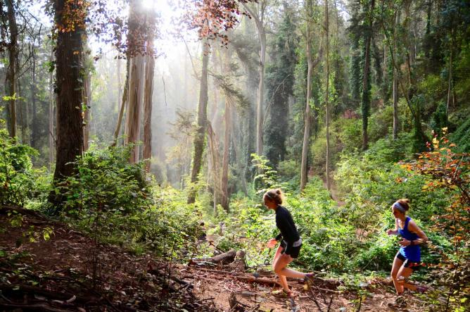 A morning November Project hike in Sutro Forest | © Paddy, november-project.com