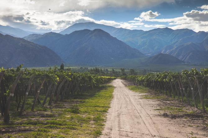 Vineyard in Salta © Chris Ford/Flickr