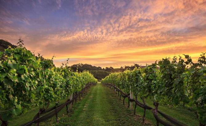 Virginia S 10 Most Beautiful Vineyards And Wineries