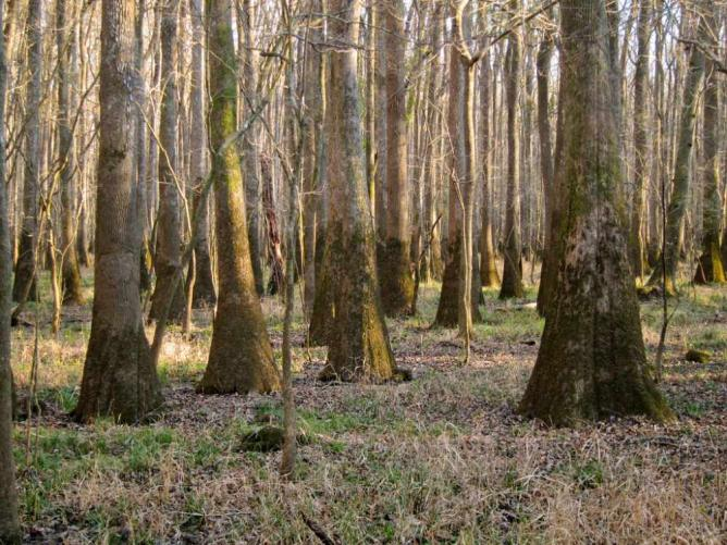 Congaree National Park | © Miguel Vieira/Flickr