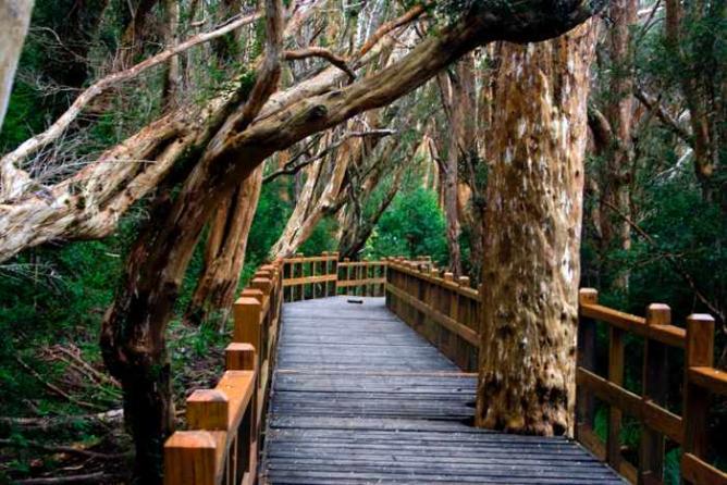 Arrayán trees Ⓒ Matías Callone/Flickr