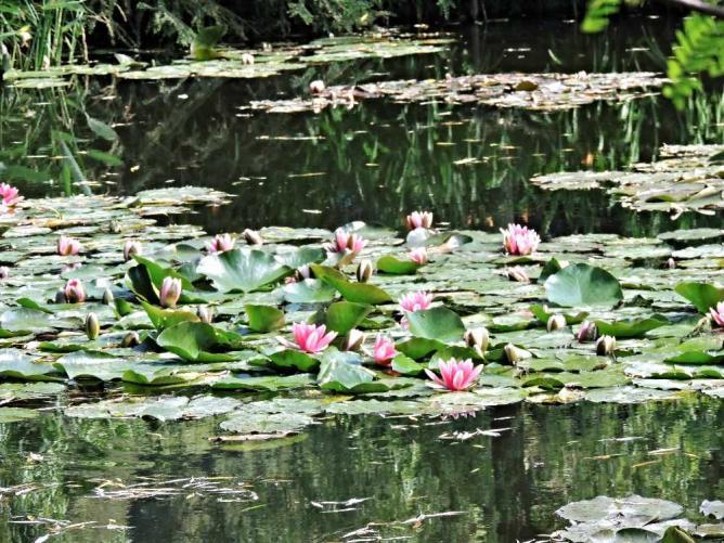 Monet's Water Lilies | © Emilie Némorin