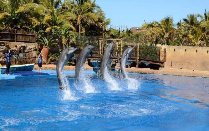 The dolphin show at Marineworld