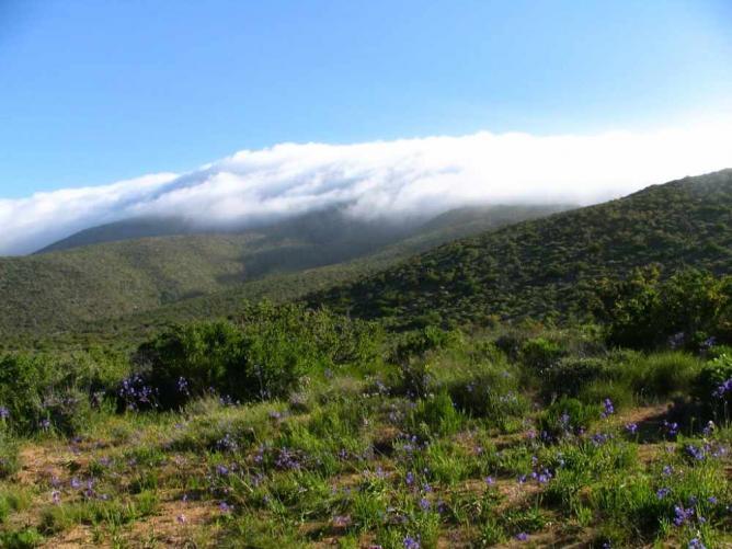 Cloud over Fray Jorge Ⓒ Pontificia Universidad Católica de Chile/WikiCommons
