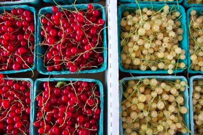 Sorauren Farmers' Market | © Lisa Kates