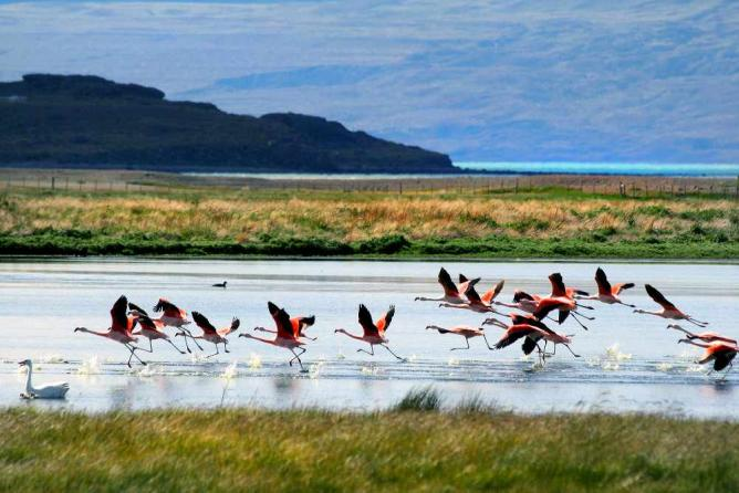 Flamingos in El Calafate Ⓒ Dimitry B./Flickr