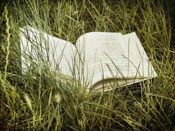 Summer Reading   © Florin Gorgan/ Flickr