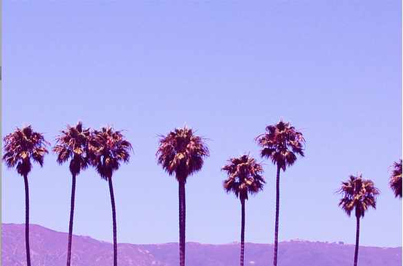 Classic LA Palm Trees