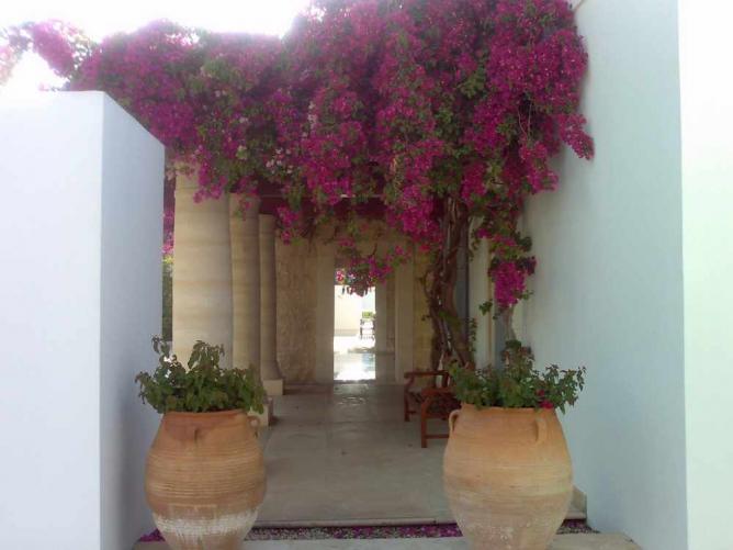 Flowers at Anassa Hotel