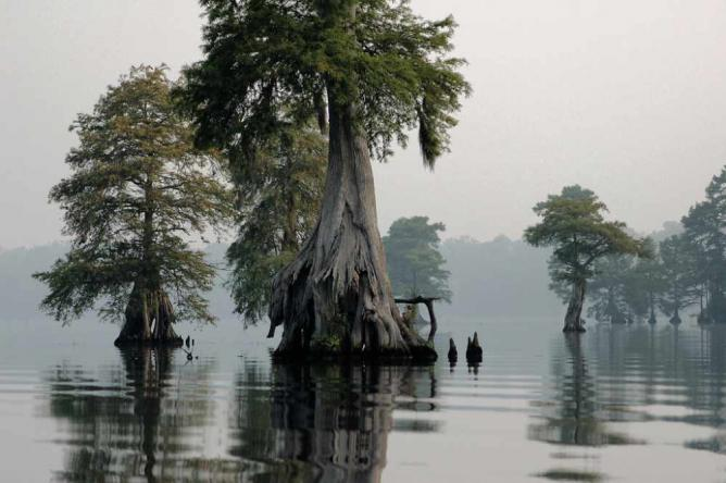 Great Dismal Swamp National Wildlife Refuge (VA)