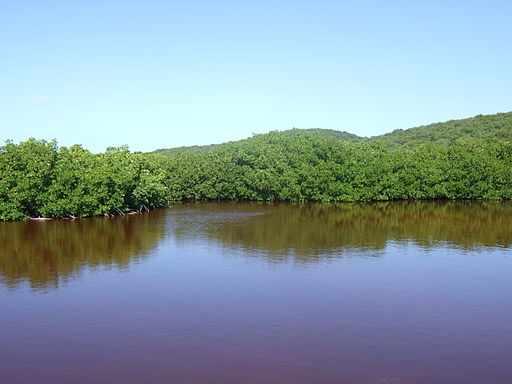 Red mangrove forest | © Boricuaeddie/WikiCommons