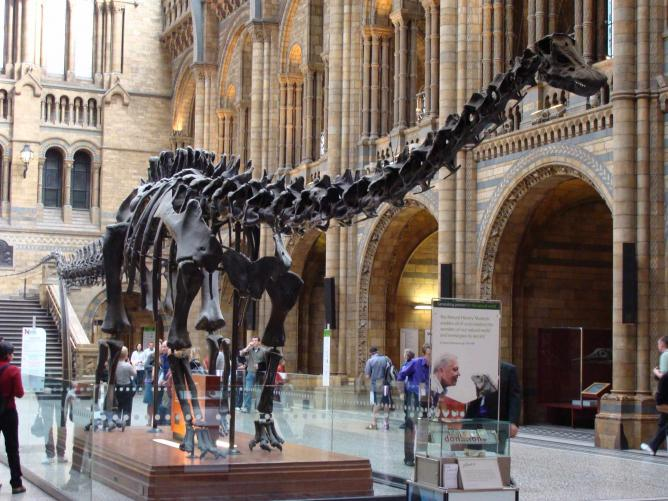 Visit Dippy, the first replica of the D Carnegii dinosaur